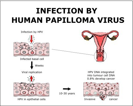human papillomavirus mode of transmission
