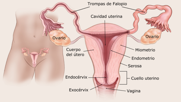 endometrial cancer in lymph nodes hpv types cancer