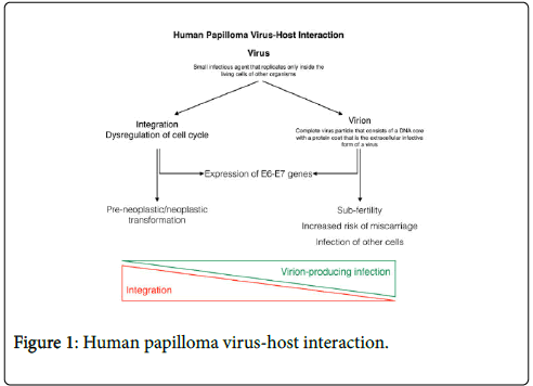 human papillomavirus cause miscarriage)