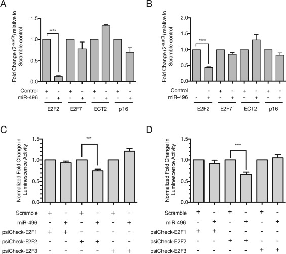 human papillomavirus 16 e6 modulates the expression of mir-496 in oropharyngeal cancer)