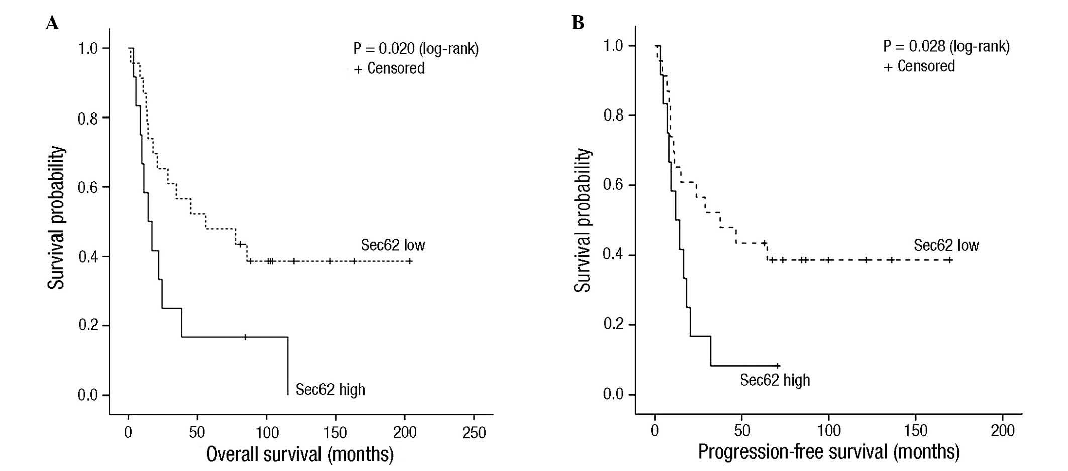 survival metastatic hpv positive head and neck cancer
