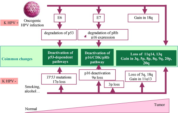 hpv head and neck cancer p16