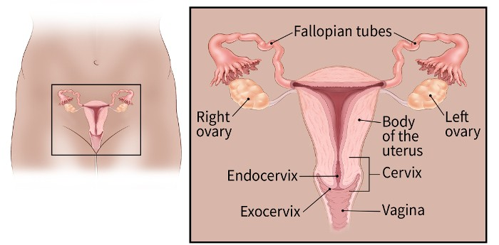 uterine cancer in cervix