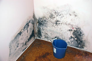 mould toxin)