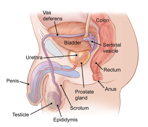cancer testicule has)