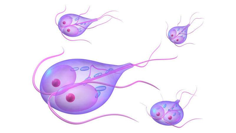 Tratament giardia copii