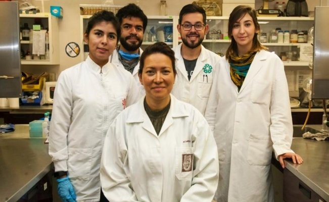 hpv cure mexican scientist)
