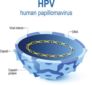 hpv infection definition)