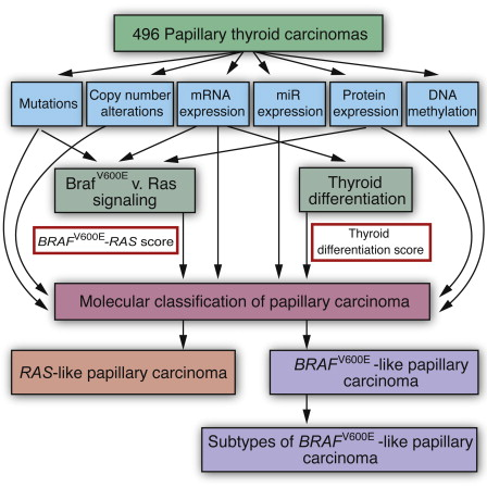 papillary thyroid cancer genetic