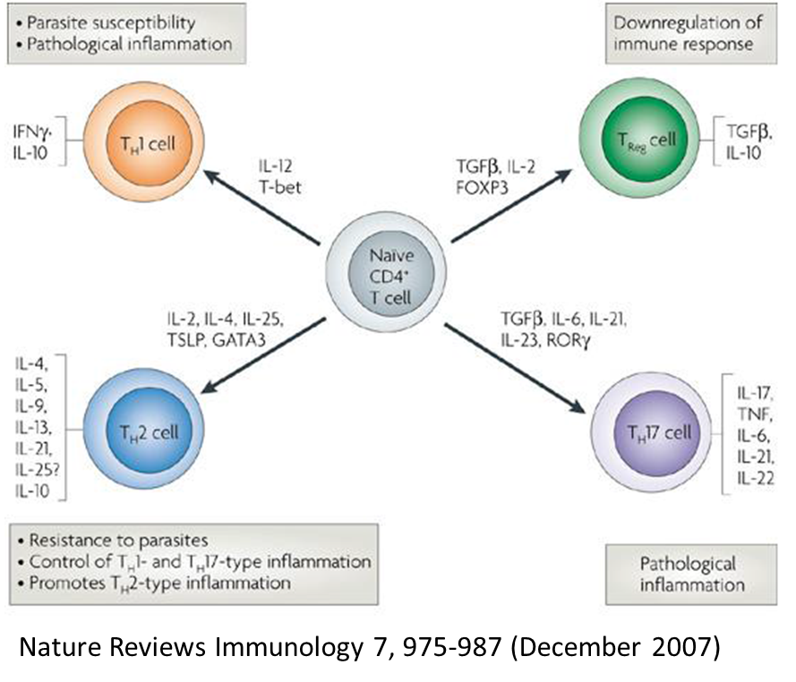 helminth therapy immune response)