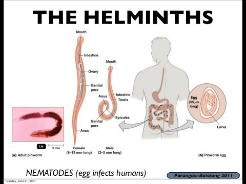 helminth meaning in medical term)
