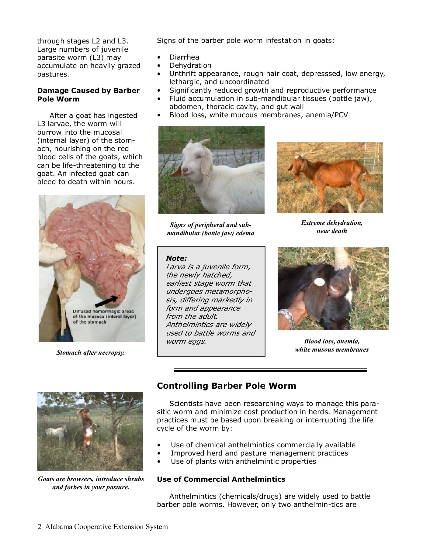 anthelmintic drugs for goats)