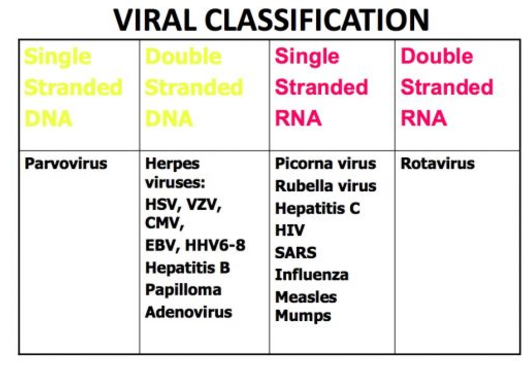 hpv virus herpes zoster)