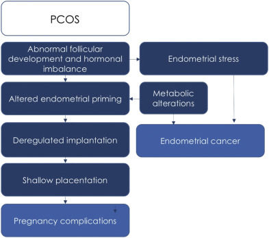 endometrial cancer from pcos