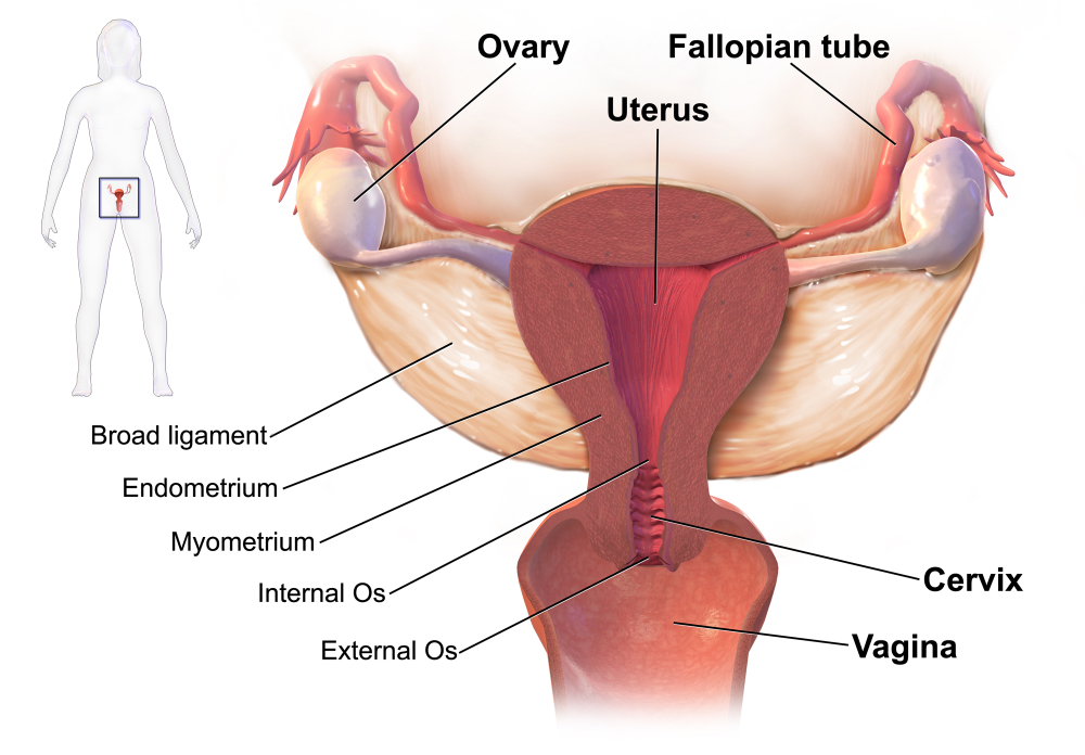 cancer uterine lining thickness