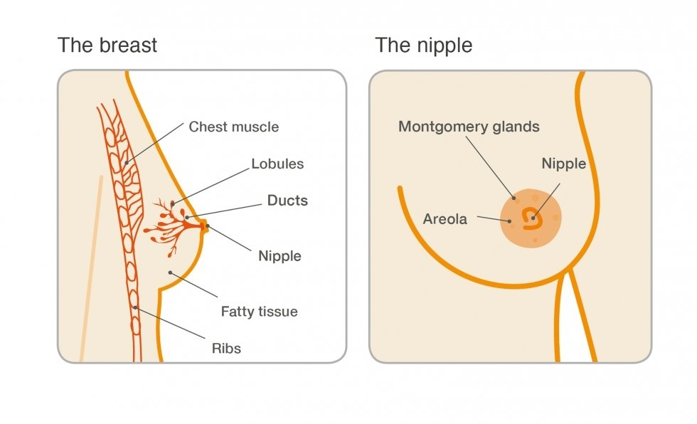 what causes breast warts