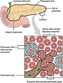 cancer de pancreas medlineplus)