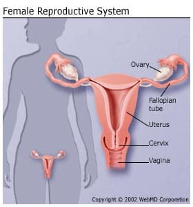 uterine cancer and back pain)