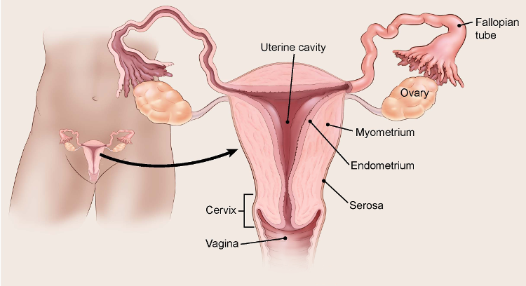 uterine cancer and pregnancy)