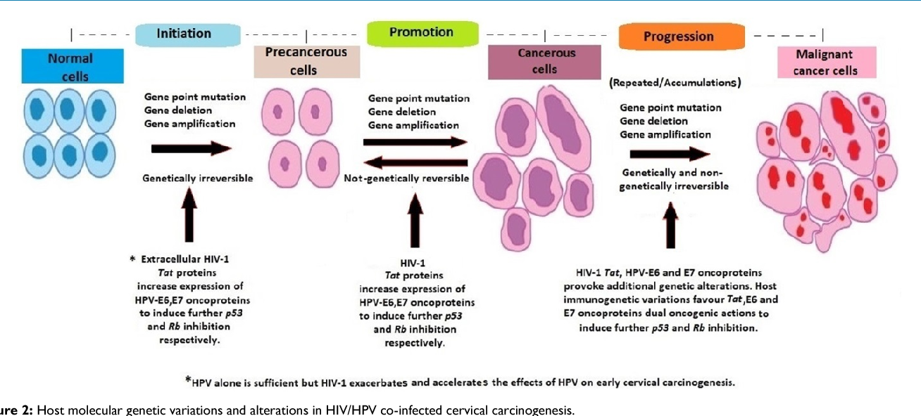 hpv cancer progression