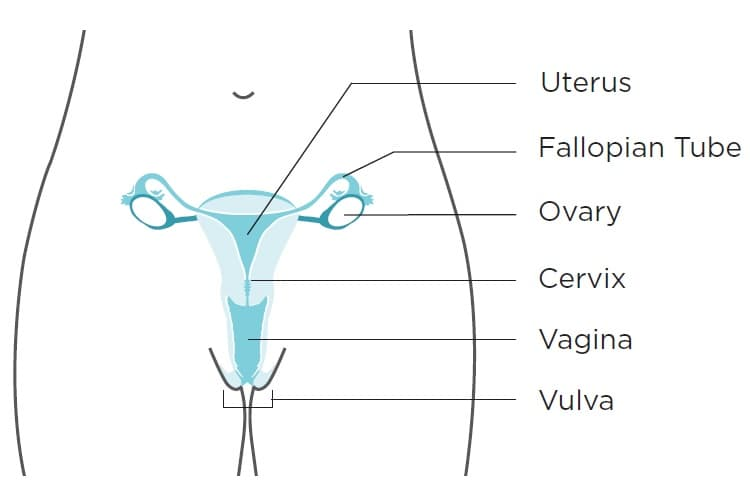 can hpv virus cause ovarian cancer)