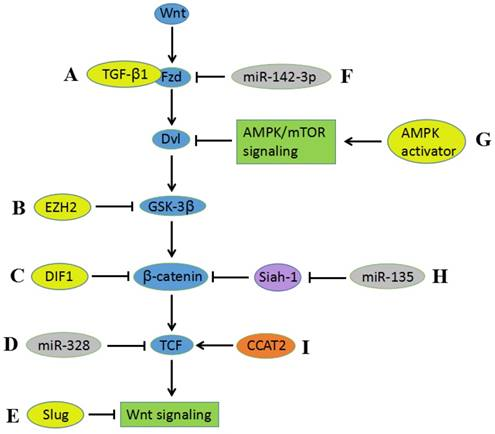hpv cancer pathway)