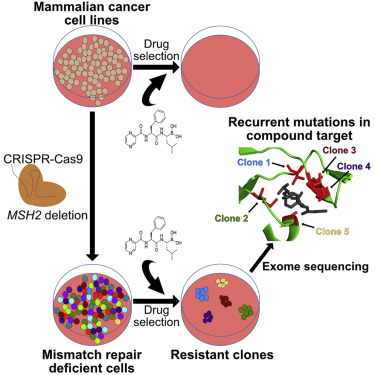 cancer and genetic engineering