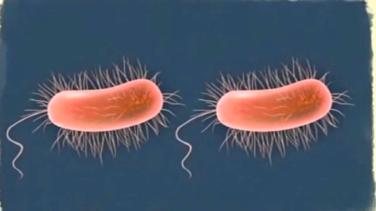 bacterii vs virusi