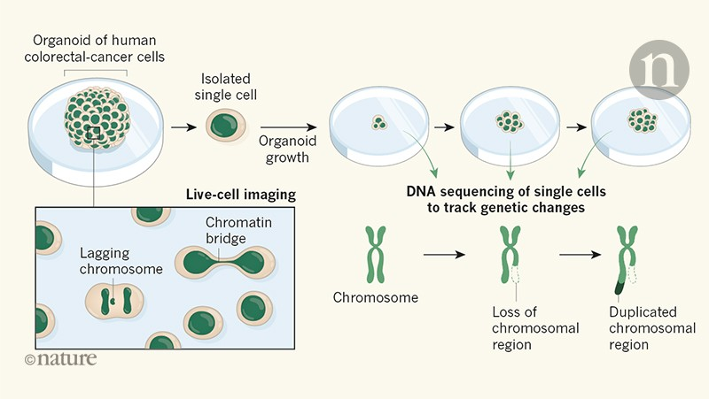 cancer and genetic changes)