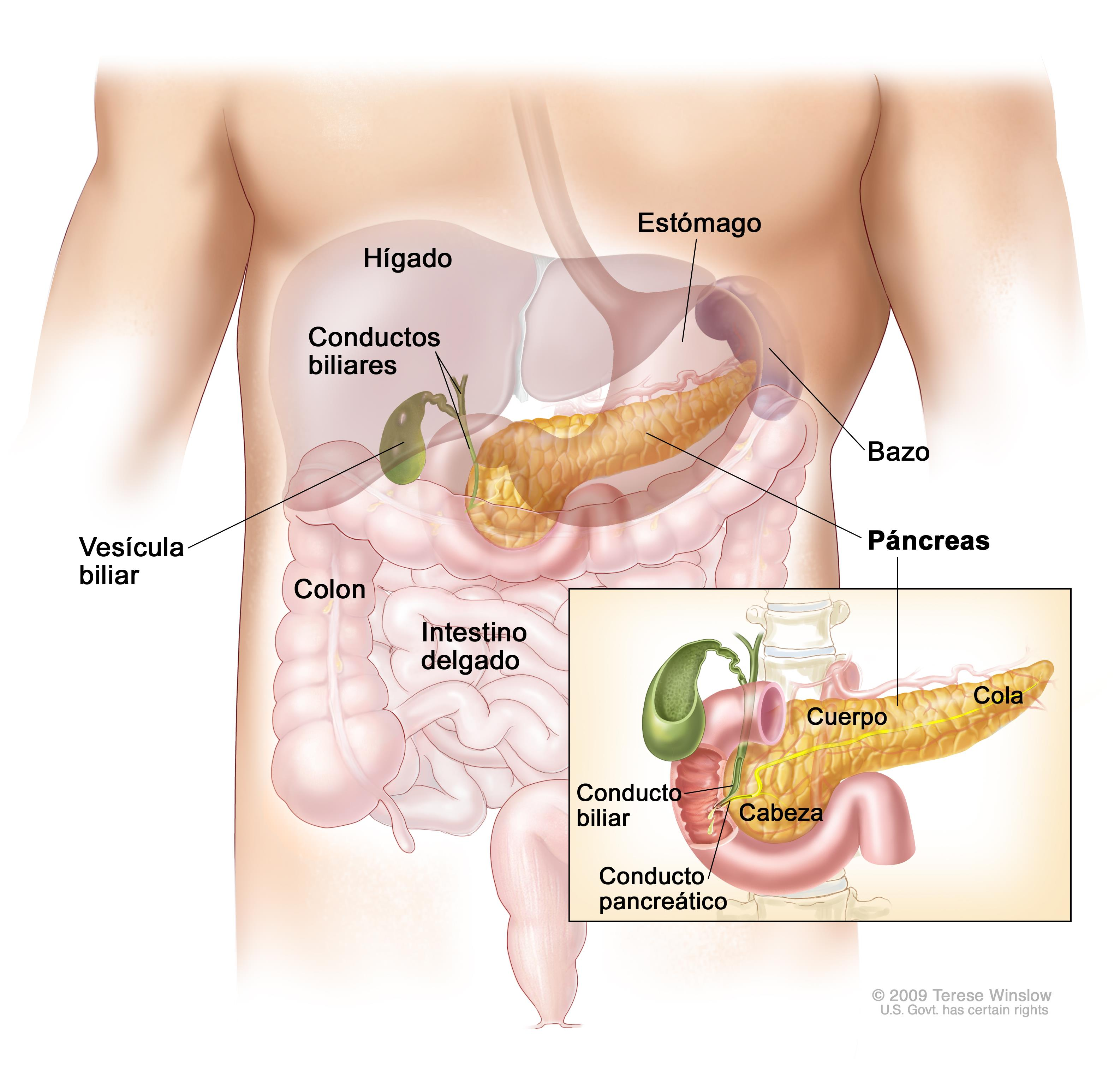 cancer pancreas que significa)