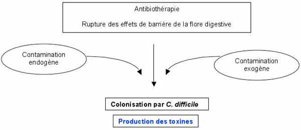 clostridium difficile antigene positif toxine positive)