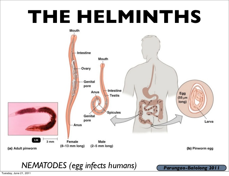 helminth disease in hindi