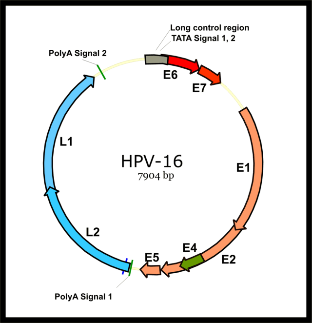 human papillomavirus genome integration and head and neck cancer