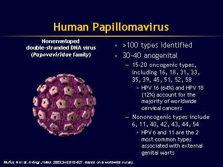 human papillomavirus infection ppt)
