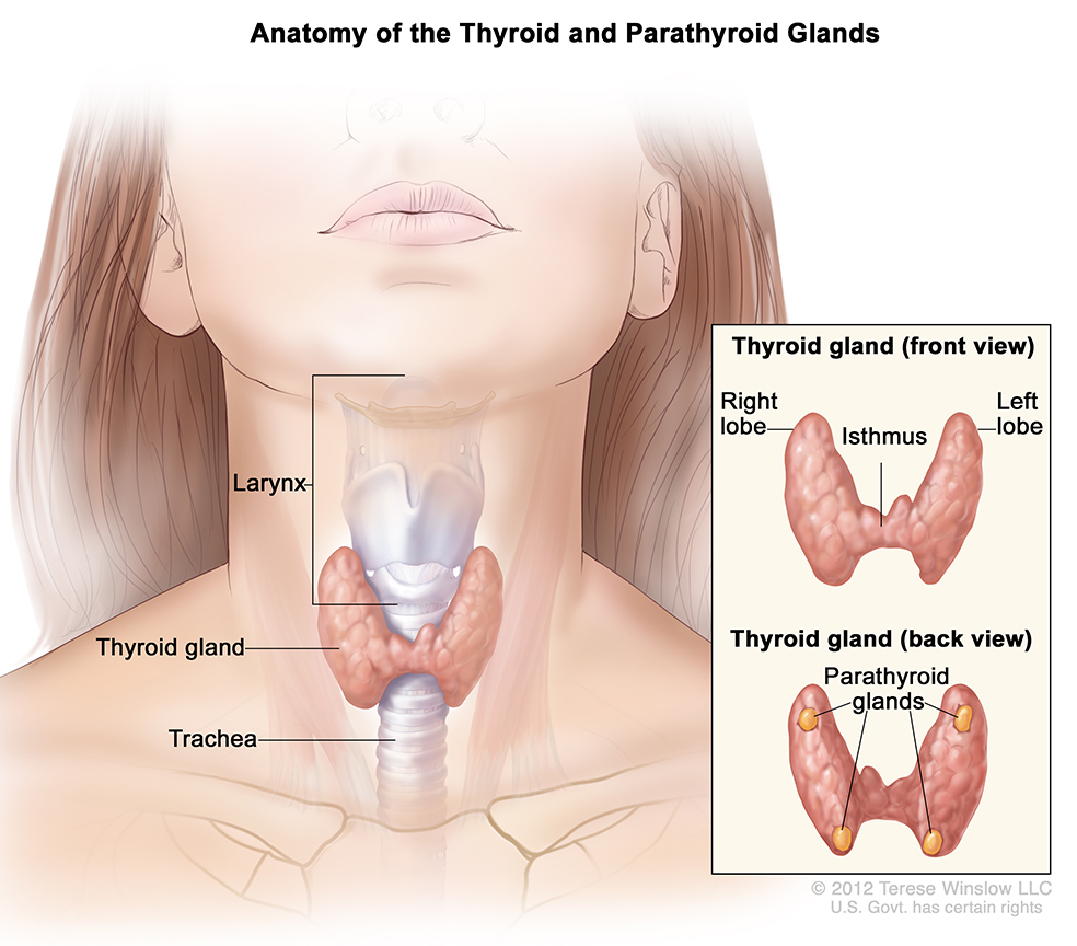 papillary thyroid cancer hpv