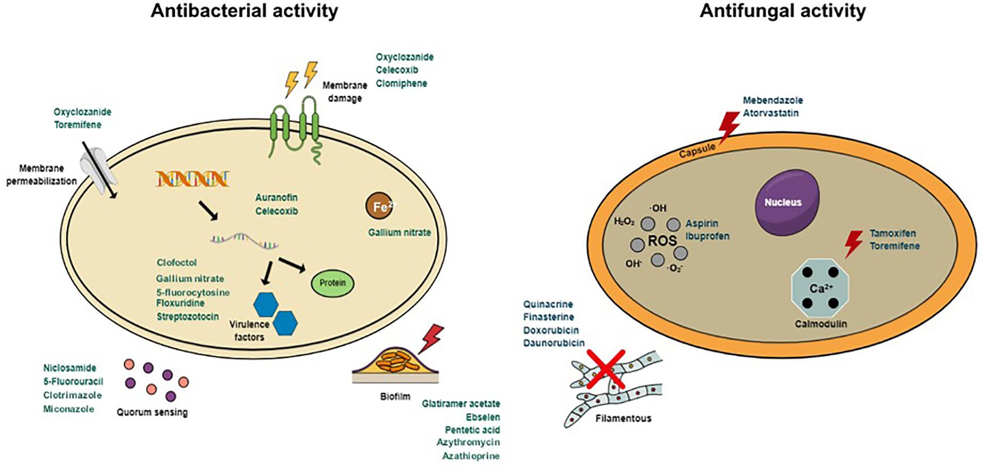 some anthelmintic therapeutic agents work by