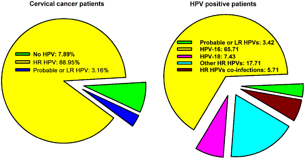 journal of hpv and cervical cancer impact factor traitement pour papillomavirus