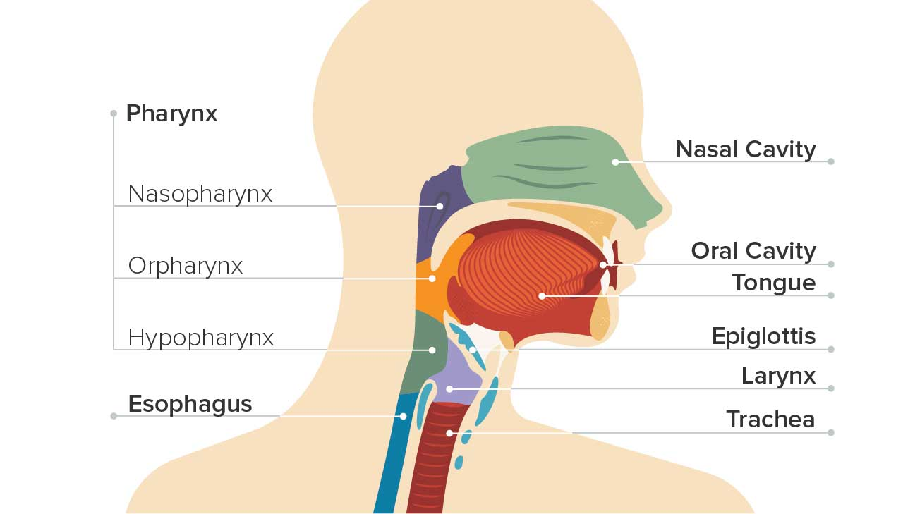 hpv throat cancer destroy diseases)