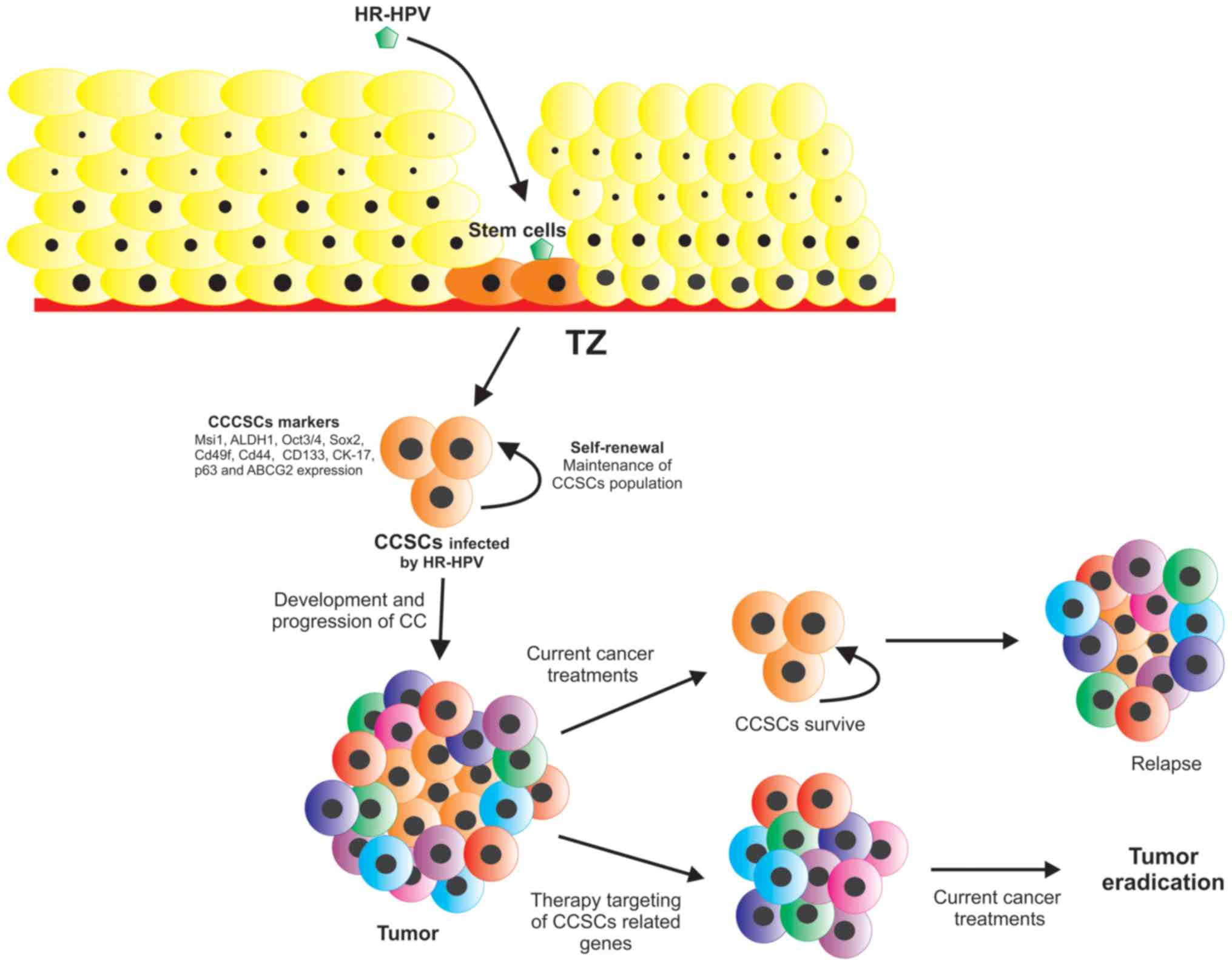 hpv and cancer treatment)