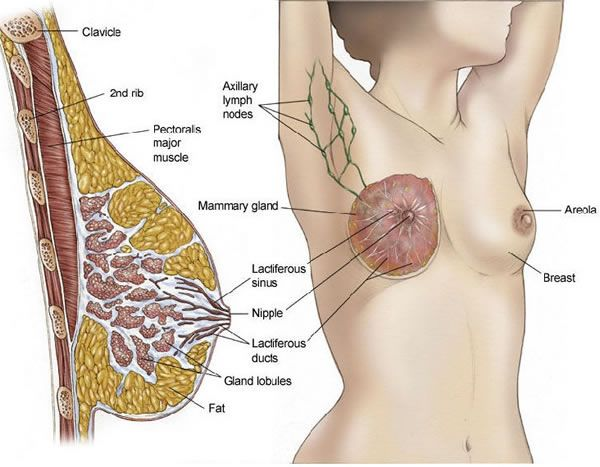 intraductal papilloma surgery cost cancer hpv males