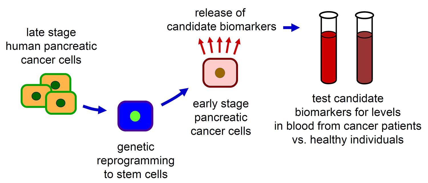pancreatic cancer detection)