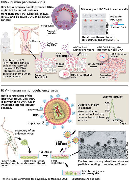 hpv virus that cause cancer)