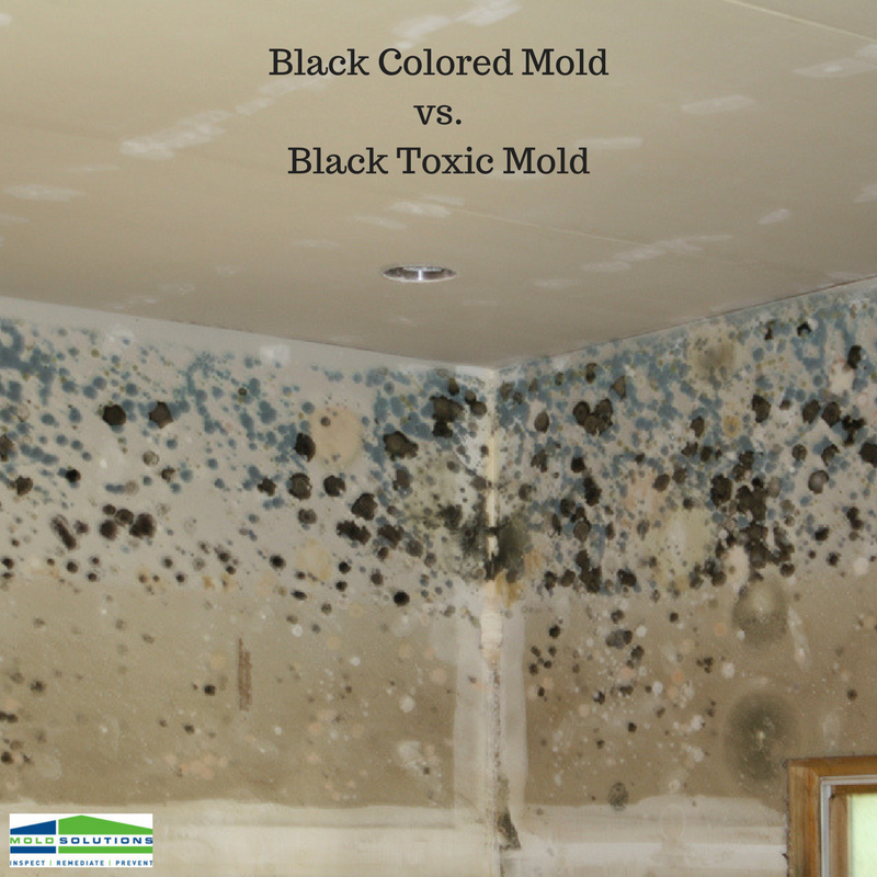 mould toxin