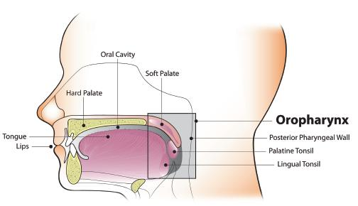 hpv and oropharyngeal cancer - fact sheet)