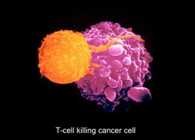 cancer genetic engineering