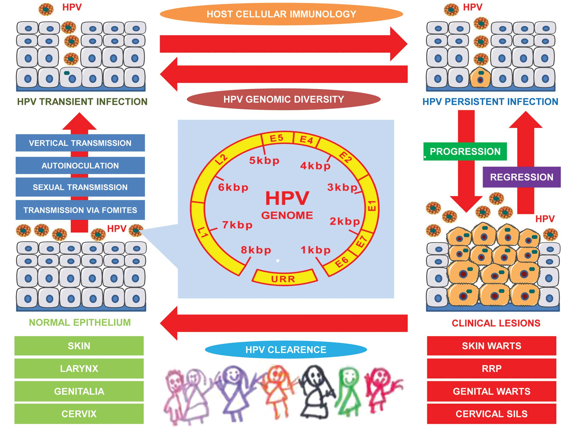 hpv virus in a child