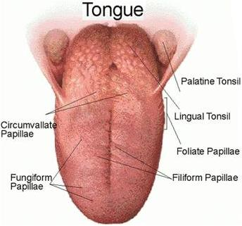 hpv cancer base of tongue)